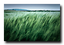 Vent dans les blés, Kochersberg