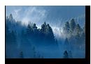 Sapins surplombant le Lac de Lispach, La Bresse, Vosges, France
