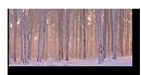 Forêt proche du Champs du feu en Alsace
