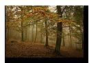 Forêt en automne proche de Lichtenberg