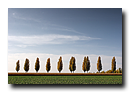 Rang�e de peupliers pr�t de Hochfelden