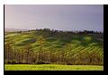 Near Albia, Crete Senesi, Tuscany, Italy, Région des Crete, Toscane, Italie