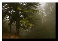 F�ret vosgienne sous la brume