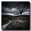 Death tree, Rannoch Moor, Lochaber, Highlands, Scotland