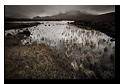 Bog near Sligachan, Loch Caol, Isle of Skye, Scotland