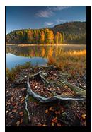 Tourbiere de Lispach en automne, La Bresse, Vosges, France